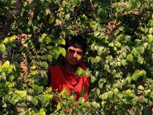 boy-on-tree-323463_640